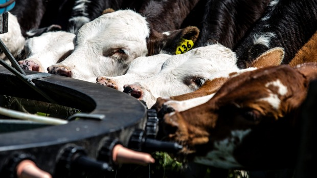 Dairy farmers may lose $1.50 for each kilo of production capacity they have over the next two seasons.