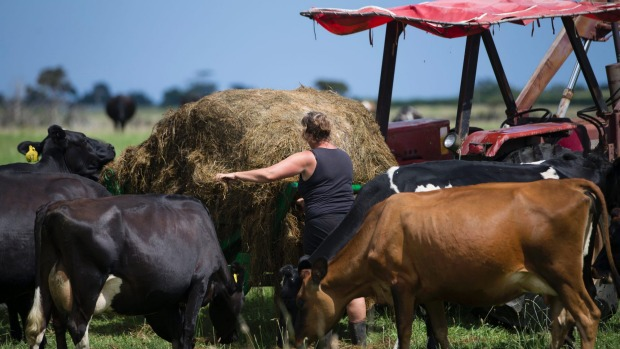 A Federated Farmers poll shows worrying levels of stress over mortgages.